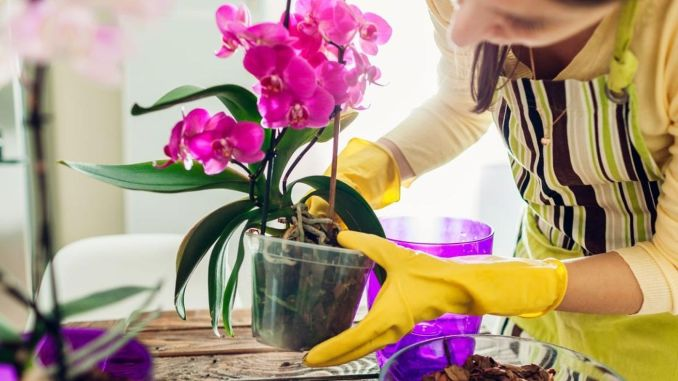 What are the benefits of growing plants at home?