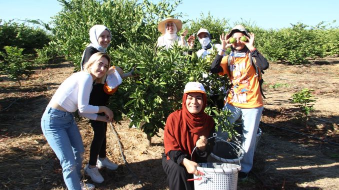 tangerines were harvested for those in need