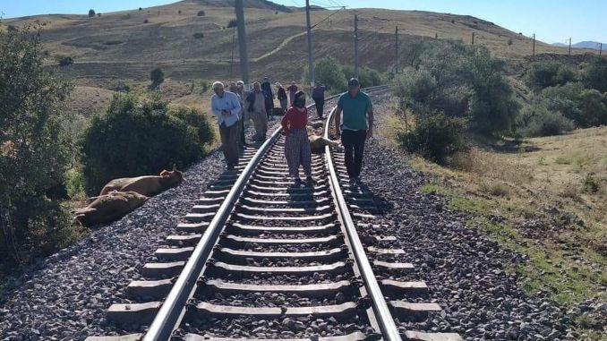 In Sivas stürzte ein Güterzug in Syrien ein, viele Rinder starben
