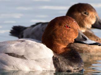 Ohlásená správa o vyhynutí vtákov