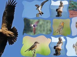 v velikem nasadu camlica bo gostil dogodek ptice selivke
