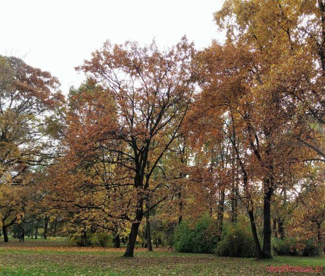 jesien-w-parku-jordana-17