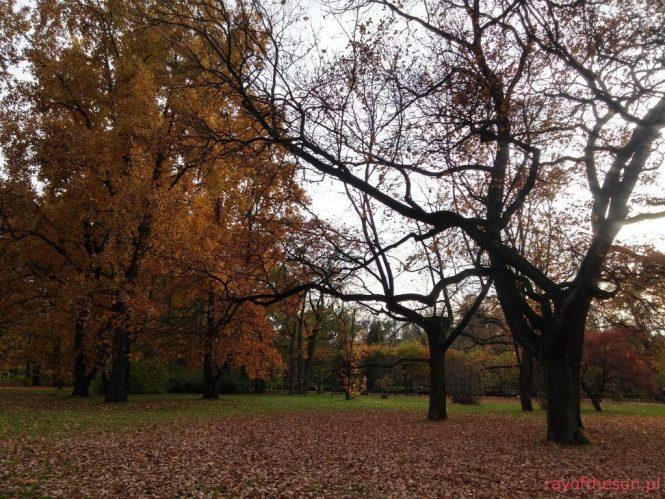 jesien-w-parku-jordana-19