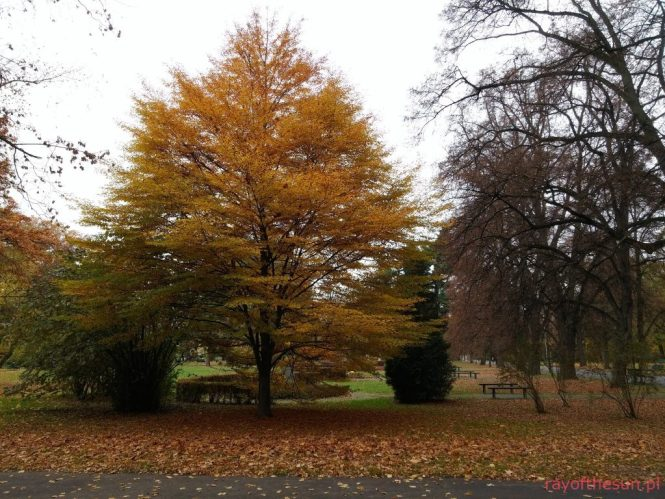 jesien-w-parku-jordana-2