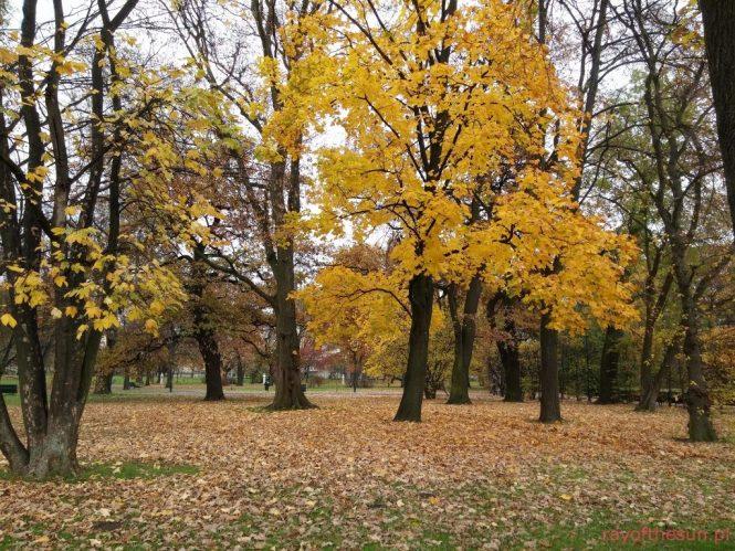 jesien-w-parku-jordana-29