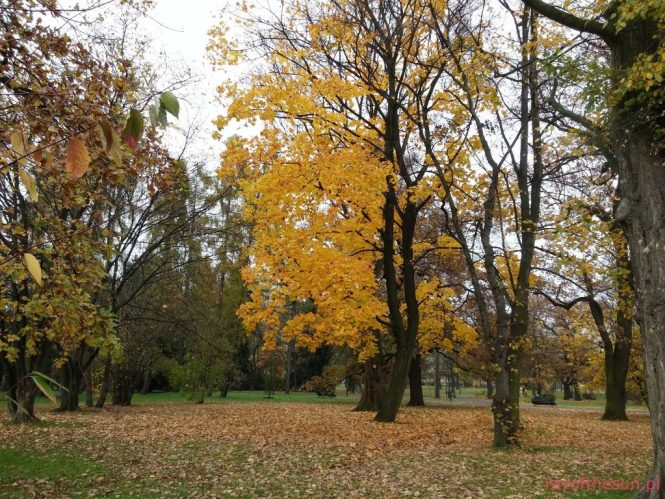jesien-w-parku-jordana-30