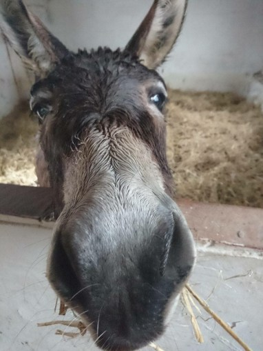 Does this make my nose look BIG?