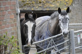 Beulah and Dixie waiting for visitors