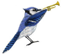 blue_jay_band2