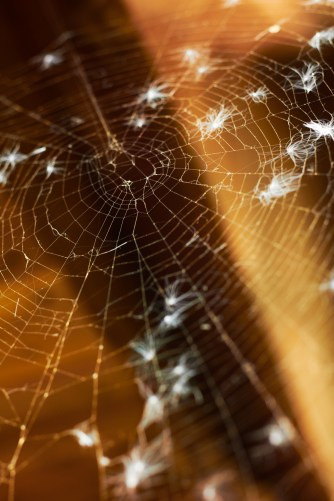 Old spider web. Shallow DOF.