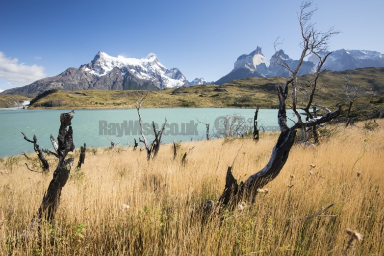 Patagonia - Torres del Paine long grass