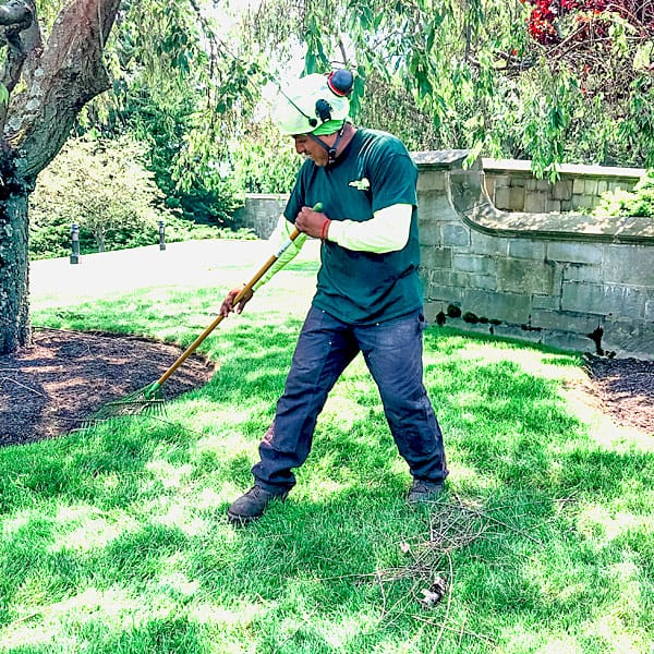 Rayzor's Edge tree Service crew member raking branches after pruning