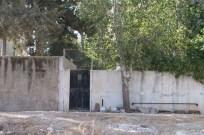 Tree in Amman Jordan