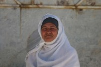 A portrait of a Palestinians woman - مرة فلسطنية