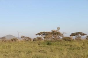 hot air balloon, safari, jungle, Serengeti, sunrise