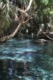 Kikuletwa, hot springs, water, africa, tanzania, african, nature, magic, divine