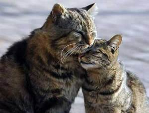 cats greeting 300x227 - Hello world!