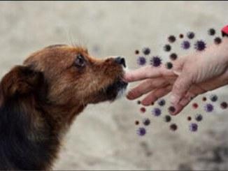 """Câini pregătiți să detecteze """"suspecţii"""" de Covid"""