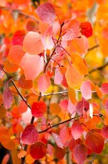 fall-colors-drive-2016-6737