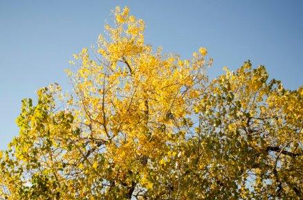 fall-photos-7021