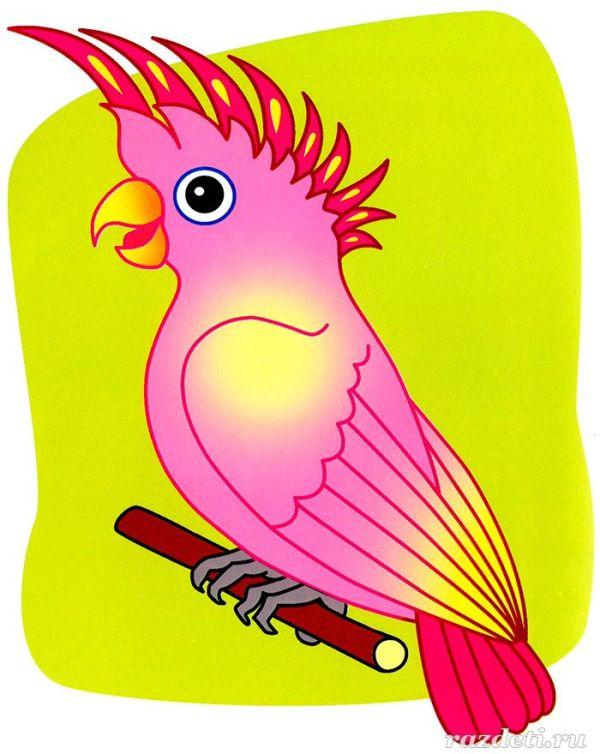 Картинка для детей. Попугай