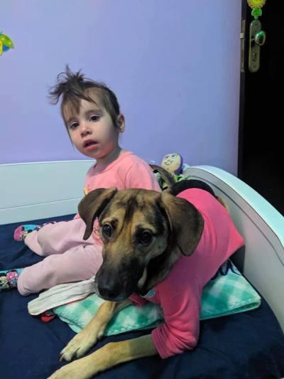 Cachorrinho atropelado transforma vida menina autista após adotado