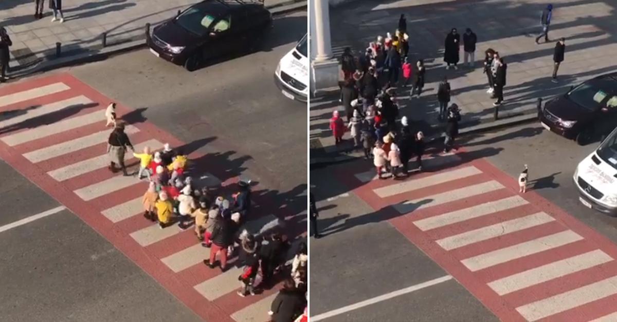 Cão interrompe trânsito para crianças atravessarem a rua em segurança; veja o vídeo