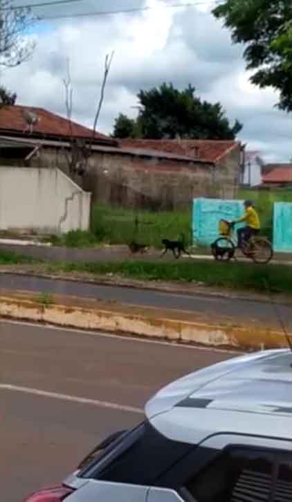 Enquanto trabalha, carteira distribui ração e amor para animais de rua em Campo Mourão (PR) 2
