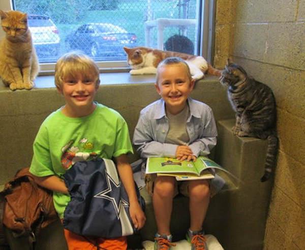 criancas-leem-gatos-abrigo-8