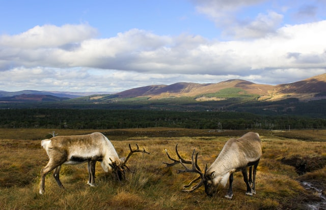 Quase um terço da Escócia será dedicado à natureza até 2030, de acordo com novos planos do governo. Foto: Darren Ford