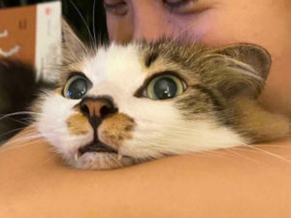 Gatos nem sempre gostam de tirar foto