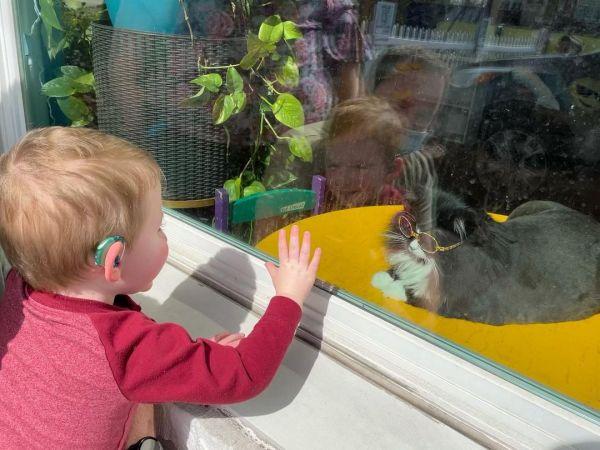 menino olha gatinha de óculos pelo vidro