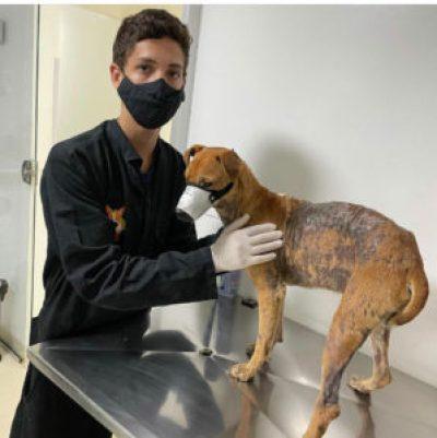 Jovem cuidando de animal ferido