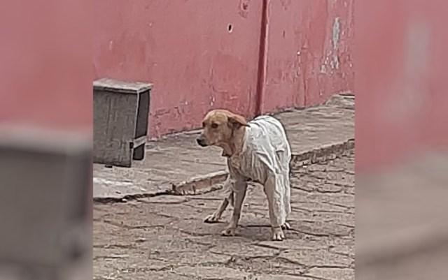 jovem agasalha cachorro de rua tremia de frio