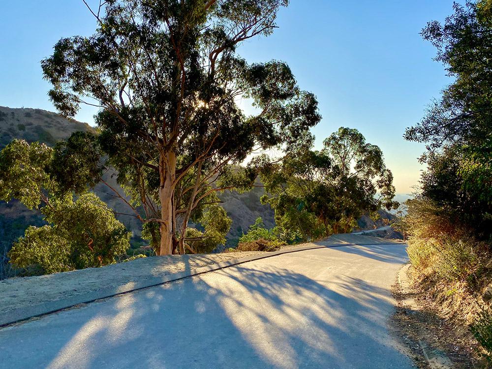 Tree at 7 A.M. at Runyon Canyon Park