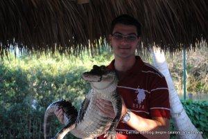 everglades razvan pascu crocodil