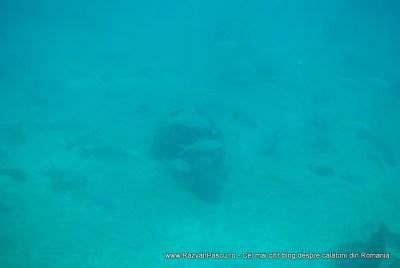 Croaziera Bahamas Nassau