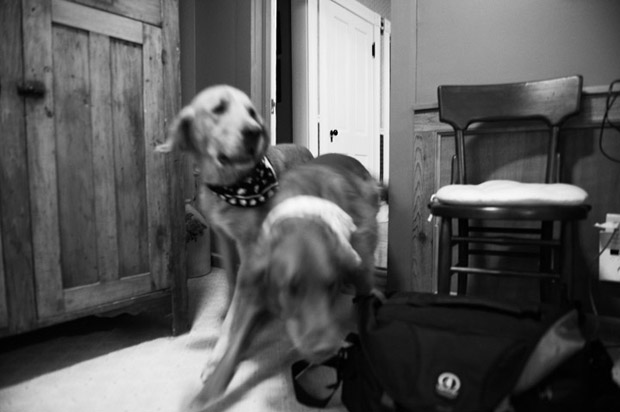 Dogs storming through the door during the family portrait session