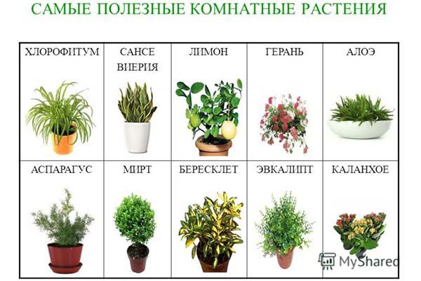 Комнатные цветы в школе какие можно, запрещенные в школе
