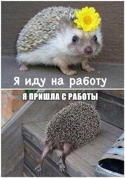 Картинки про работу с приколами   Развлекуха.ру
