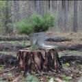 Лес своими руками