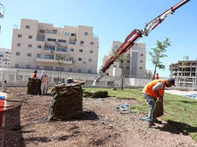 הפועלים מניחים את הדשא שירד כעת מהמנוף