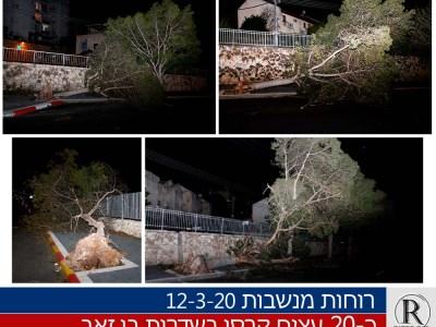 עצים קרסו בבית שמש בשדרות בן זאב