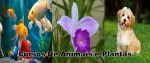 curso de animais e plantas 150x63 - Rc Cursos Online: O Melhor Site De Cursos Livres A Distância Com Certificado Reconhecido Pelo Mec.