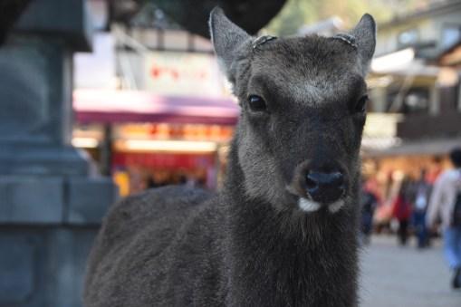 i am a deer