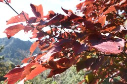 more autumn leaves