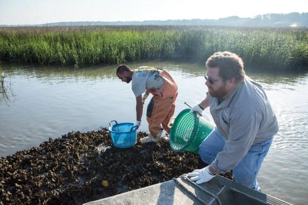 oystermen