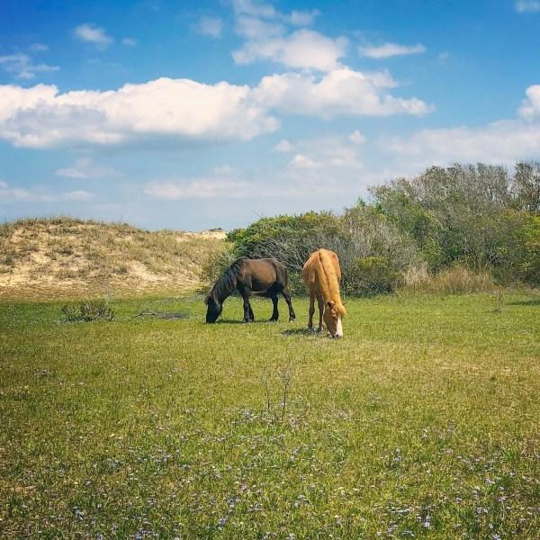 Horses of Shackleford Banks - RCI Plus Topsail