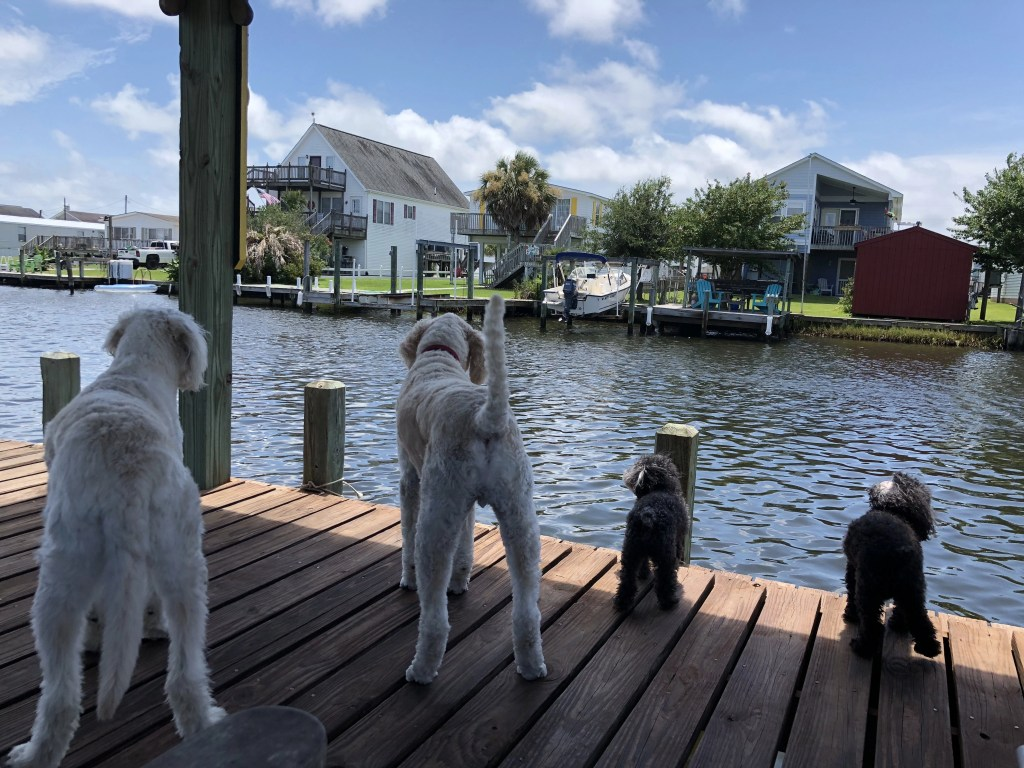 dogs enjoying their view on the dock surf city nc greta Siddiqui - RCI Plus Topsail