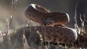 iJRC016_E-Revo vs Rattlesnake 06